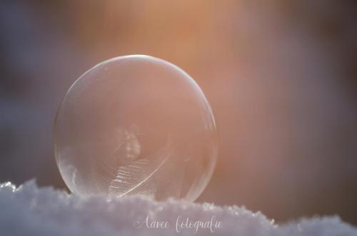 Winterbubble
