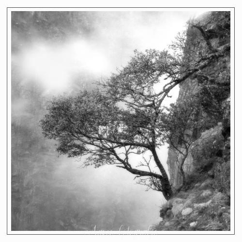 Lonely tree, Voringfossen, Norway